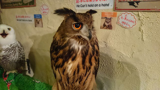 20160506_owl01.jpg