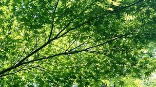 20160519_green.jpg