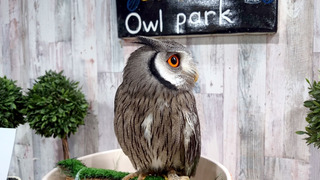 20170122_owl01.jpg