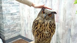 20170122_owl02.jpg