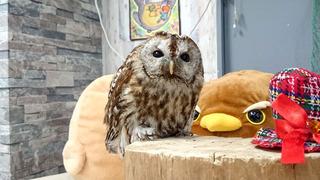 20170122_owl03.jpg