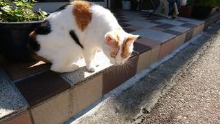 20190927_cat_02.jpg